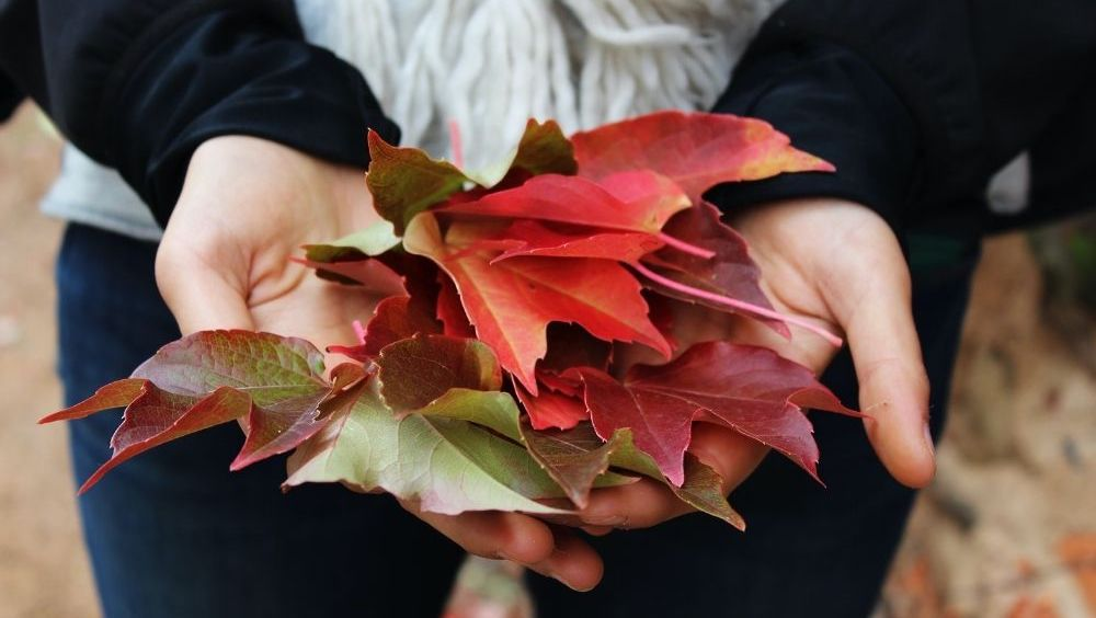 Fall Leaves | Style Maker Fabrics